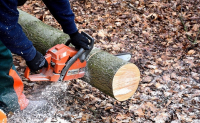 Puusta pitkälle – tuhti tietopaketti metsänomistajille